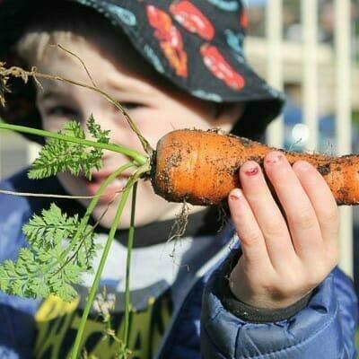Boy holding carrot freshly picked from garden