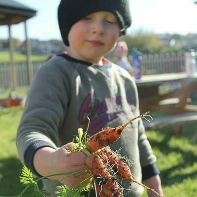 Boy holding carrots picked from garden